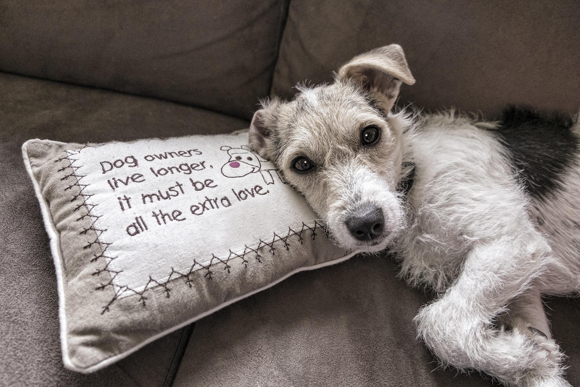 Como tirar cheiro de xixi de cachorro do sofá? Vejas essas super dicas