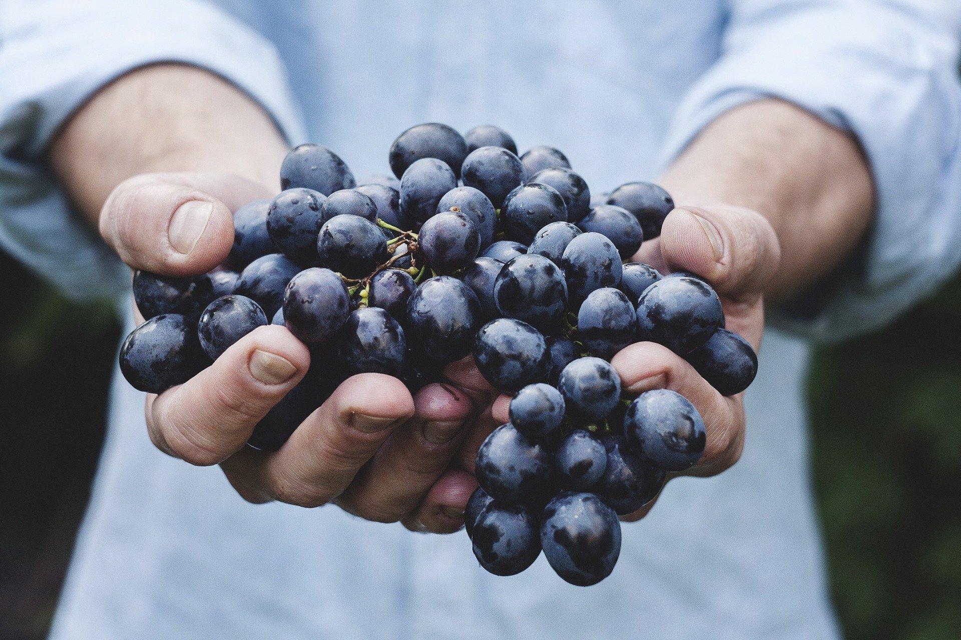 Como tirar mancha de fruta de estofados: 7 dicas fáceis e infalíveis