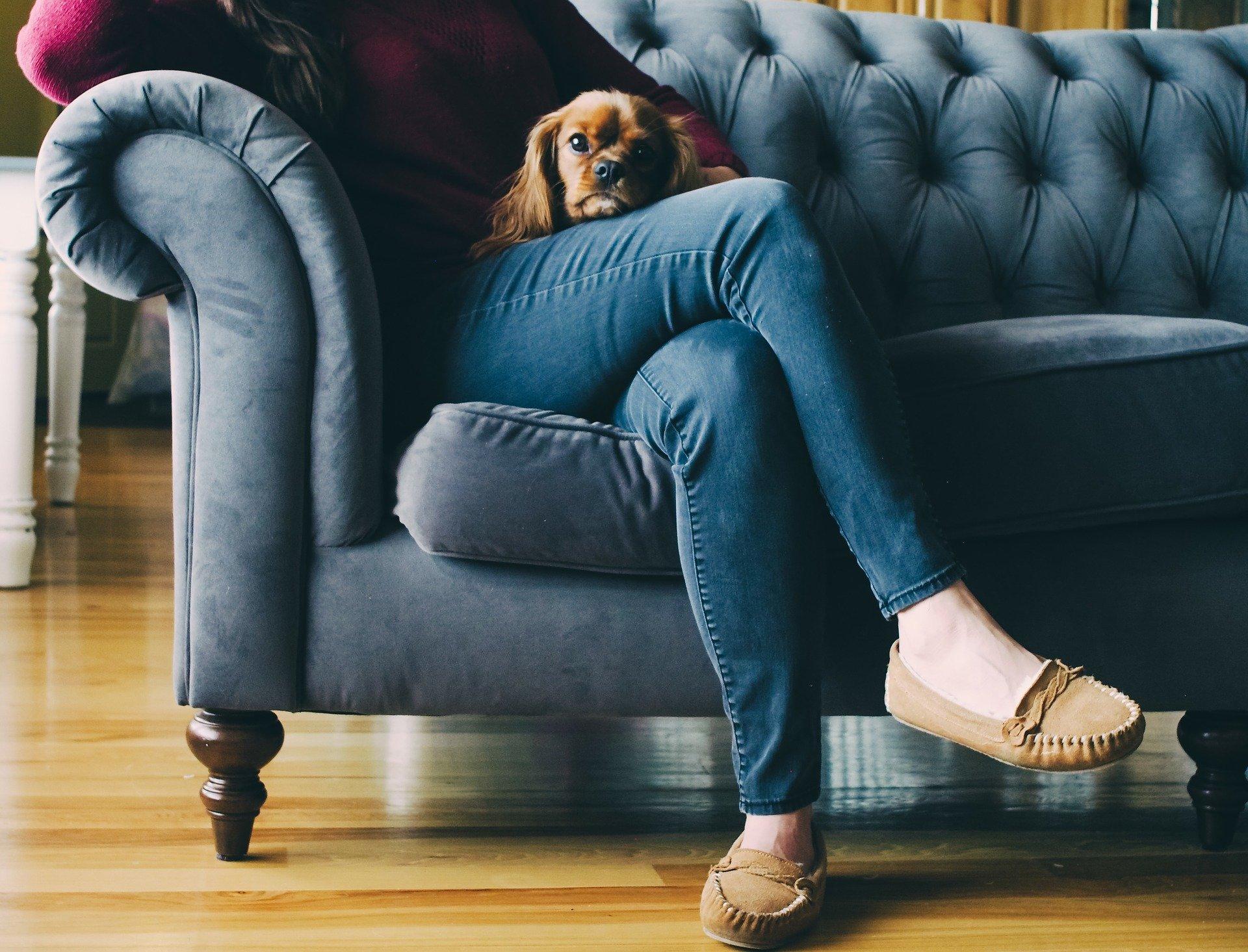 Foto de uma pessoa sentada em um sofá com cachorro. Imagem ilustrativa para o texto como tirar o mau cheiro do seu sofá.